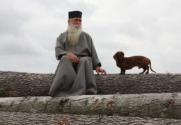 Считается ли собака нечистым животным и можно ли кошкам и собакам жить в доме?