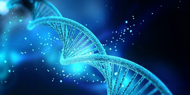 genetika-dnk-660x330